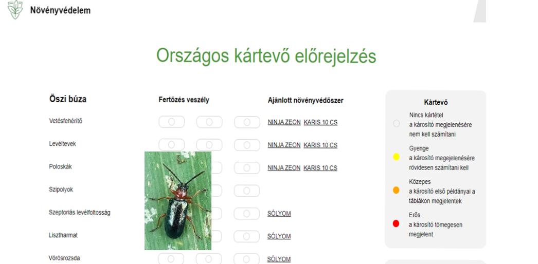 hogy melyik rovar neve zsargonban jelöli az opciót